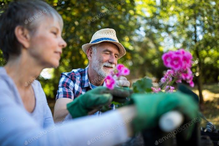 Senior pareja jardinería en el jardín