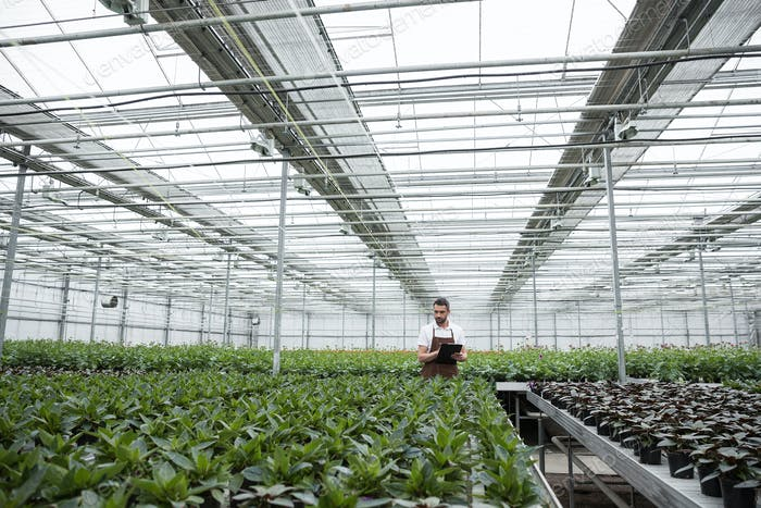 Concentrated man standing in greenhouse near plants