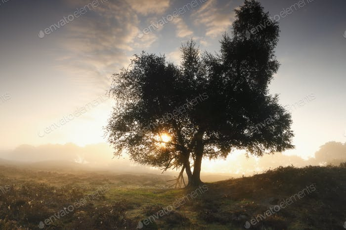 beautiful misty sunrise behind tree