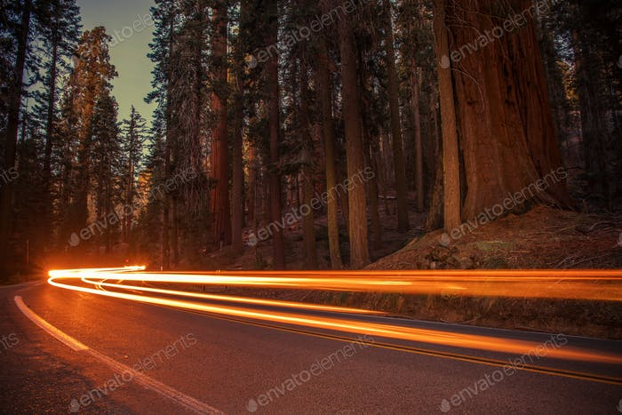 Sequoias Highway Traffic
