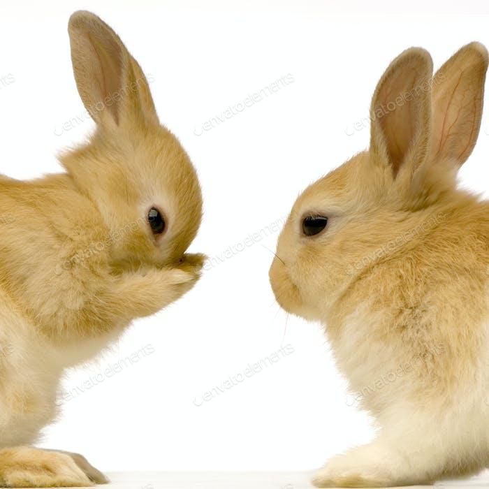Kaninchen aus