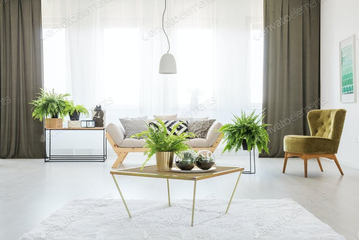 Monochromatic living room with ferns
