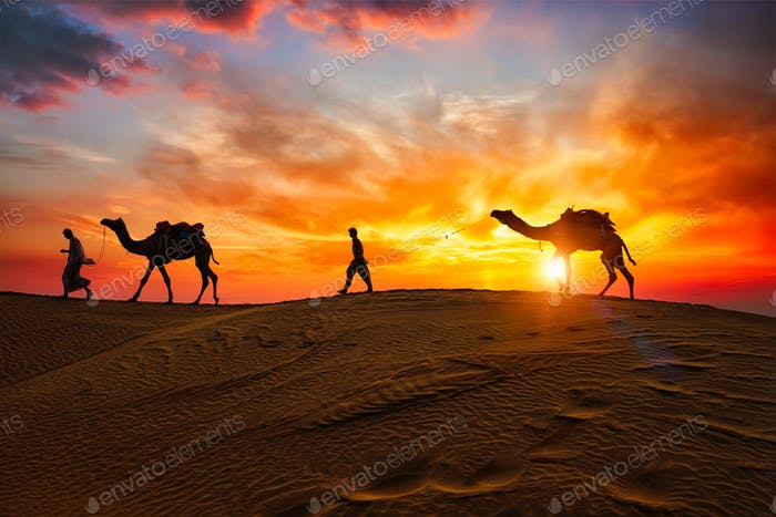 Indische Kameläer Kamelfahrer mit Kamelsilhouetten in Dünen bei Sonnenuntergang. Jaisalmer, Rajasthan, Indien