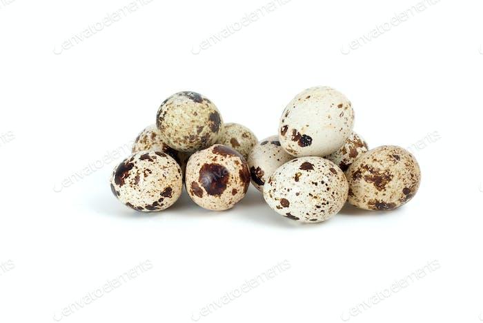Few fresh quail eggs