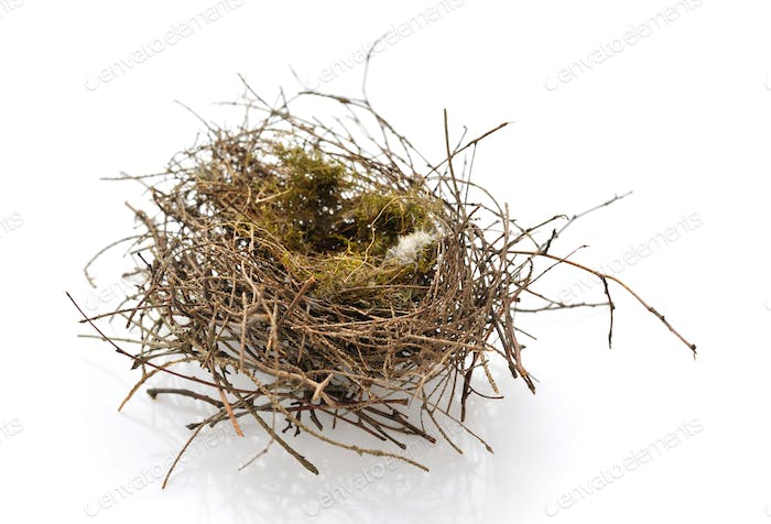 Real empty bird nest on white background