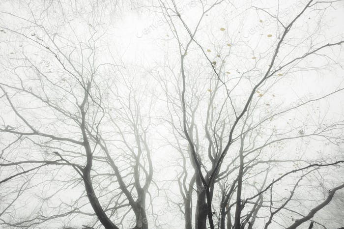 abstract tree branches in mist background