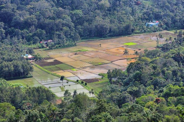 Überflutete Reisfelder in Munnar, Kerala, Indien.