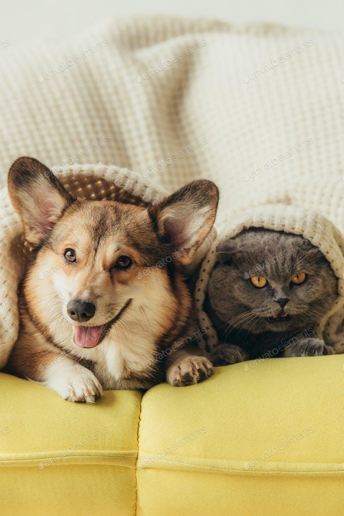 mascotas divertidas acostados juntos bajo cuadros en el sofá
