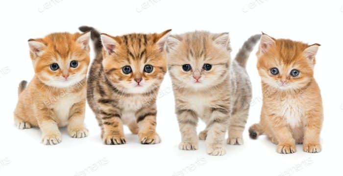 Portrait of four  kittens