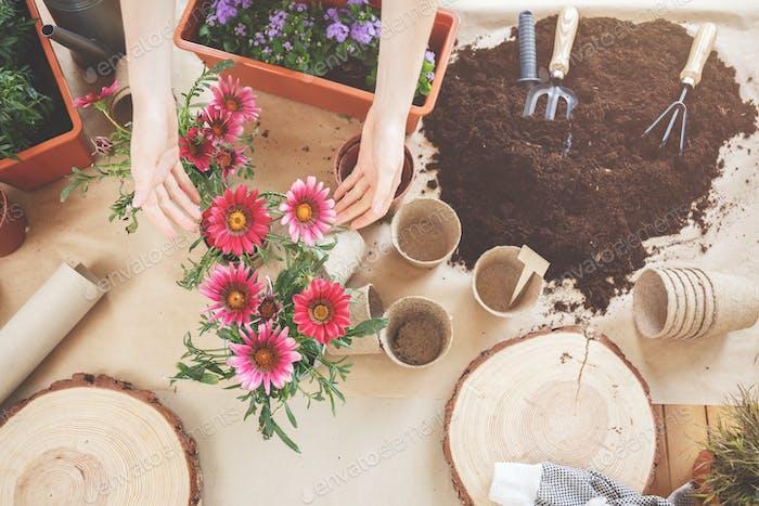 Draufsicht von schönen Blumen