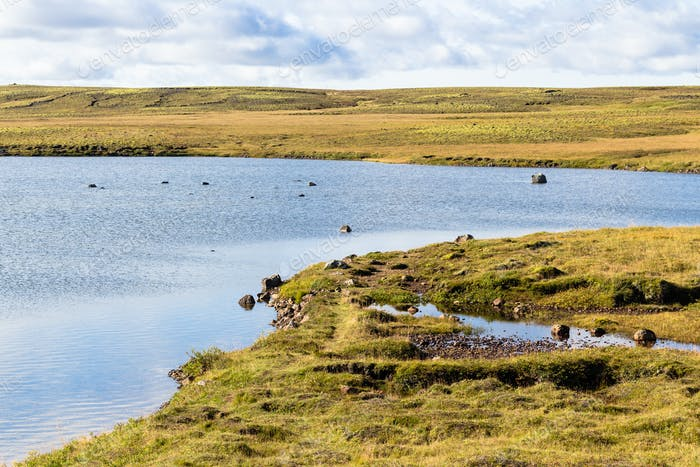 marsh landscape of Iceland in september sunny day