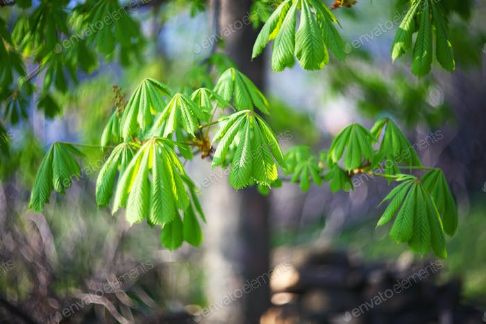 leaves of the chestnut forest backdrop