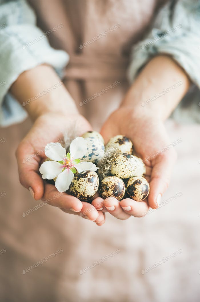 Quail eggs in hands of woman for Easter