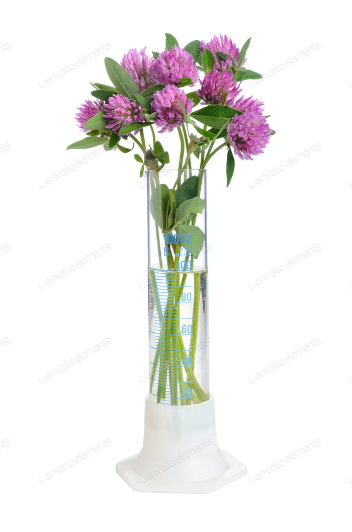 Clover in test tube