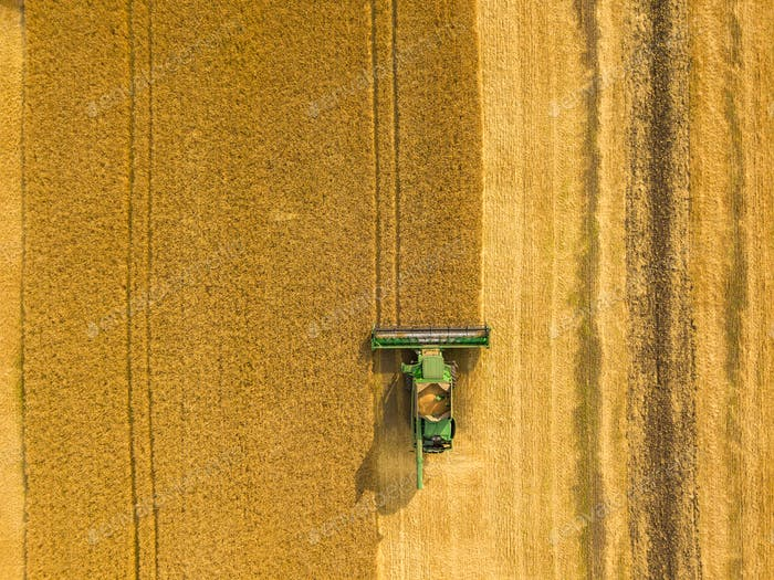 Top view combine harvester gathers the wheat at sunset. Harvesti