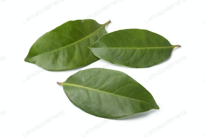 Indonesian bay leaves