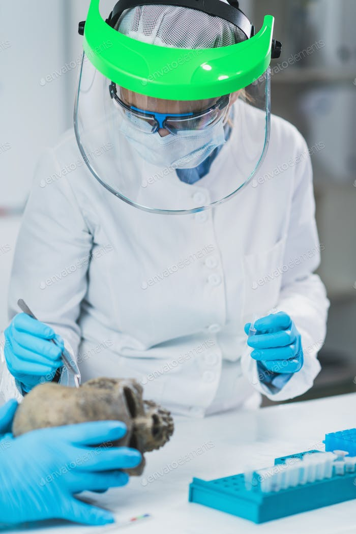 Bioarcheology. Archaeologist Analyzing Ancient Human Skull in Laboratory