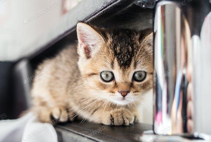 Nice cute frightened kitten