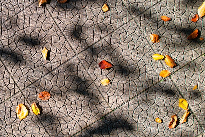 Small autumn leaves