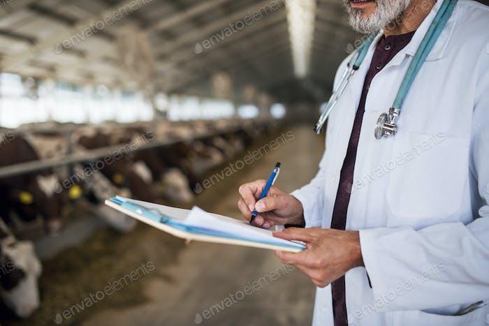 Unerkennbare Tierarzt Arbeit auf Tagebuch Bauernhof, Landwirtschaft Industrie