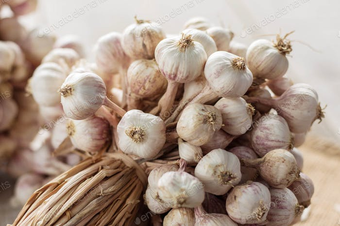 garlic with white background