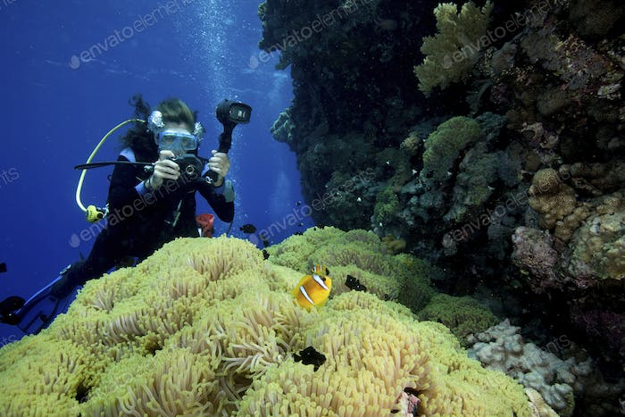 A carpet of green from a Gigantic Sea Anemone (Stichodactyla gigantea) provides a backdrop for a