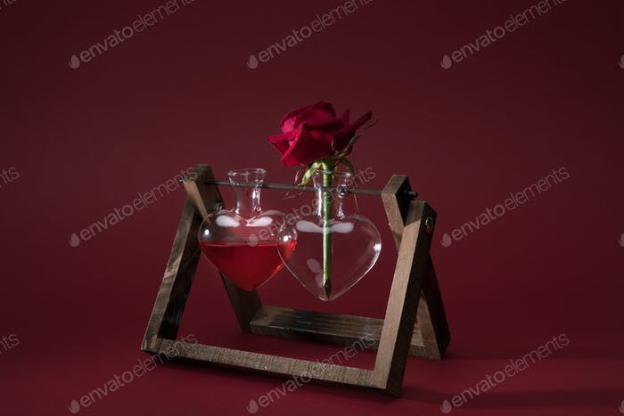 red rose in heart shaped vase and vase with love elixir on red