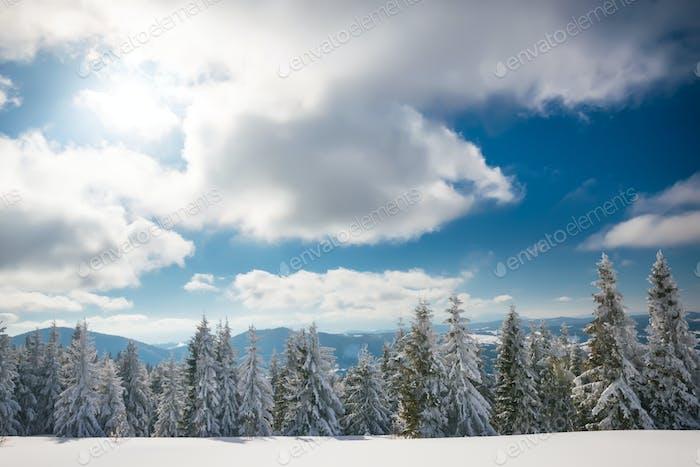 Sunny winter landscape of snowdrifts