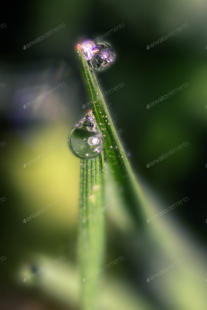 Pair of Water Drops on Green Grass