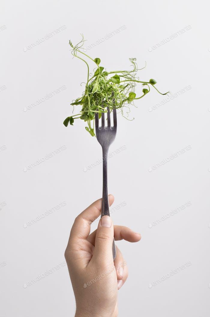 Frische Microgreen auf Gabel in weiblicher Hand über weißem Hintergrund