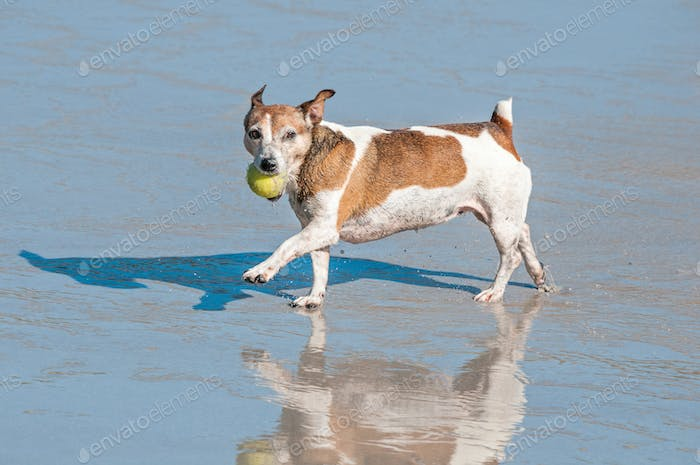 Dog playing in the sea at abeach in Hermanus