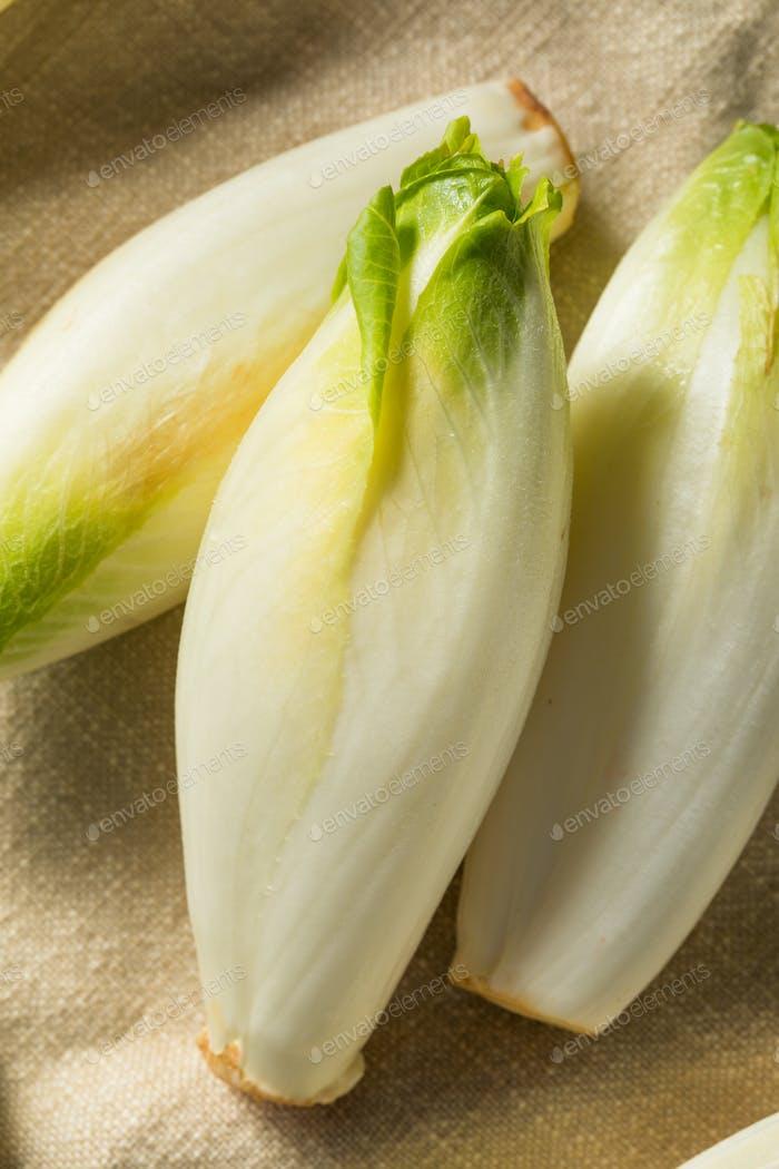 Raw Organic Belgian Endive