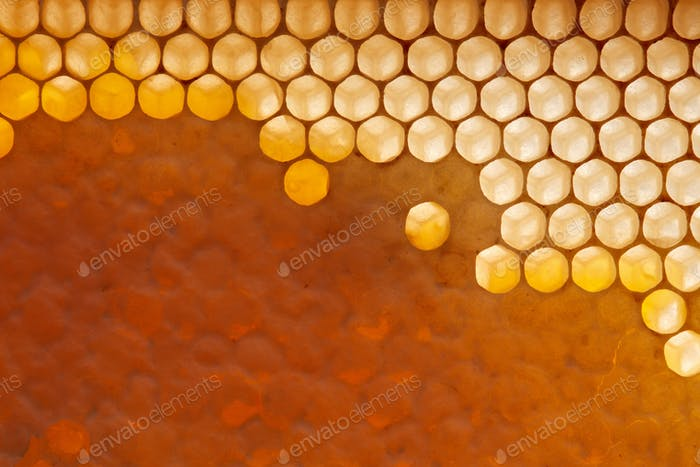 Fresh organic honey in wax comb. Macro photo of organic product. Flat lay