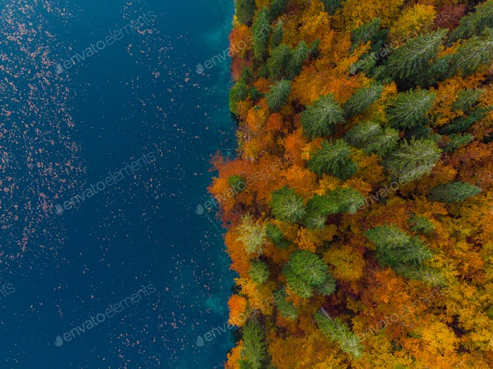 Blue water lake edge and autumn forest, top down from above