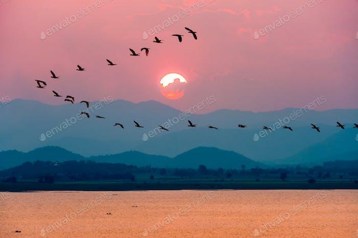 Vögel fliegen über den See während des Sonnenuntergangs