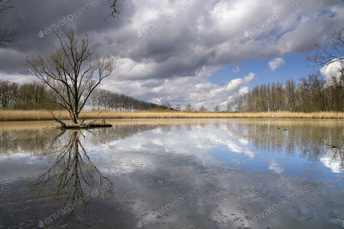 Nature reserve near Dordrecht