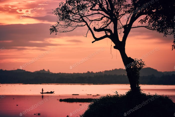 Silhouette tree and fisherman on boat at sunset