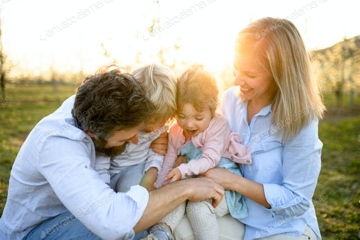 Family with two small children sitting outdoors in orchard in spring at sunset