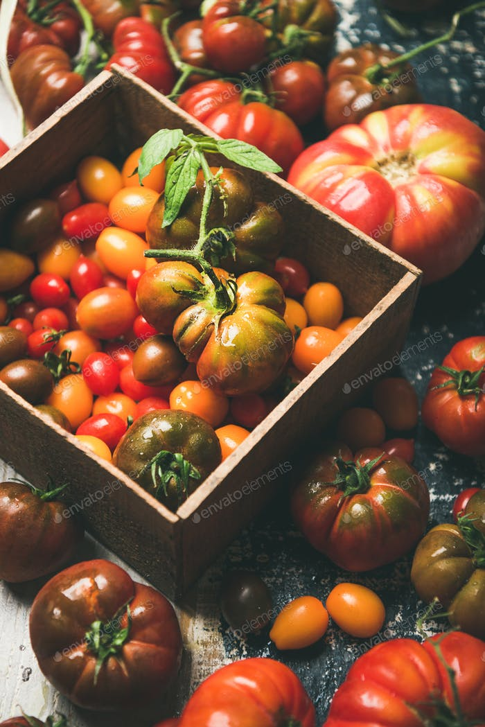 Fresh colorful Fall or Summer heirloom, bunch and cherry tomatoes