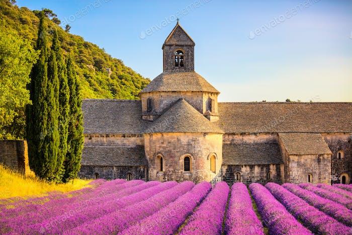 Abtei von Senanque blühenden Lavendelblüten bei Sonnenuntergang. Gordes, L