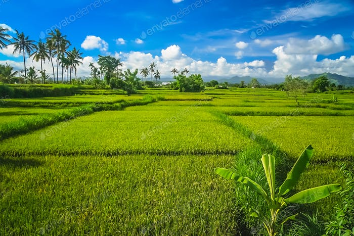 Dense tropical landscape of Bali