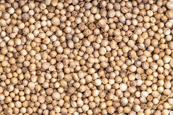 background - many dried coriander seeds