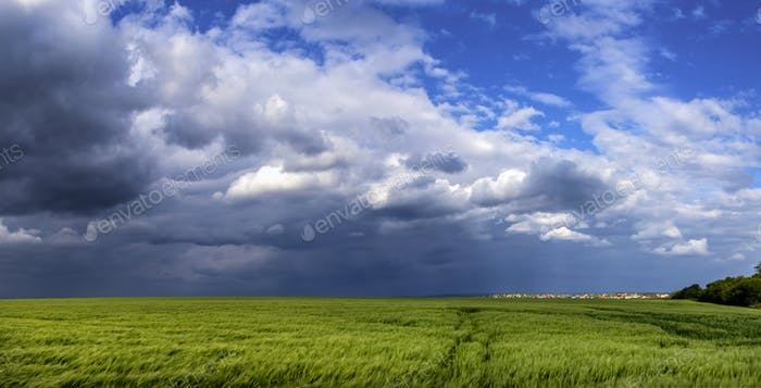 Green Wheat Or Barley Field With Storming Sky