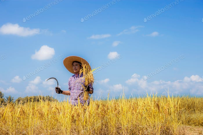 Farmer standing with a sickle on field