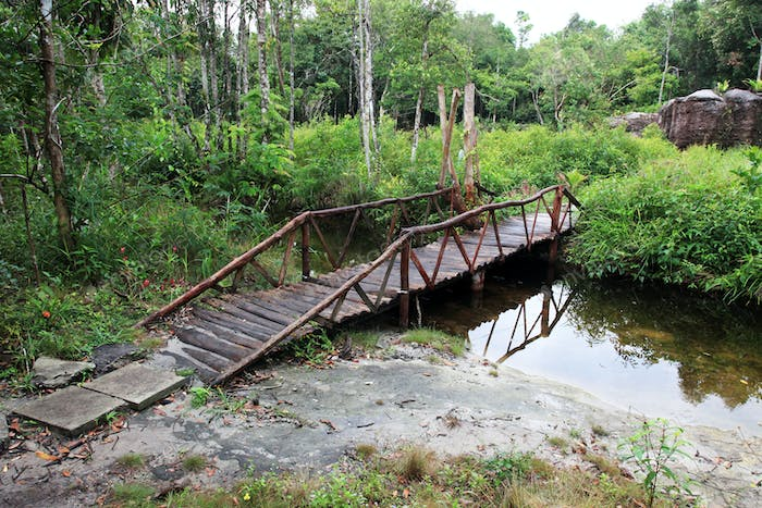 Landscapes of the jungle of Vietnam