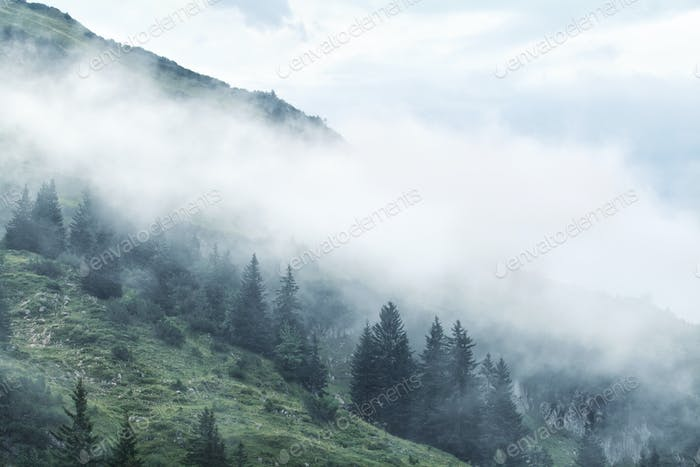 morning fog in mountains