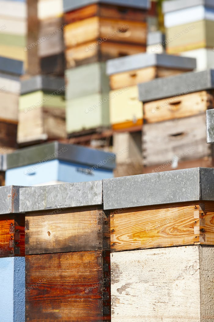 Thumbnail for Beehives. Traditional colored wooden box. Muniellos, Asturias, Spain. Horizontal