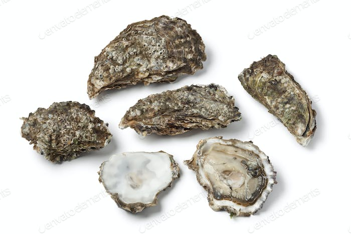 Raw Pacific oysters