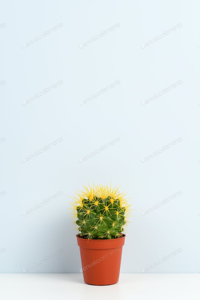 Small cactus in pot on shelf near wall
