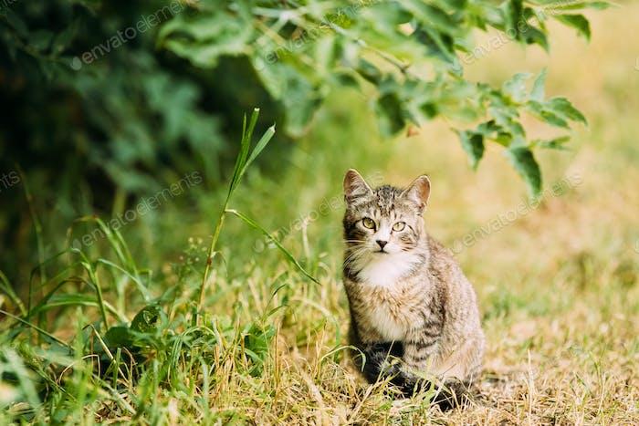 Niedlich Tabby Grau Katze Kätzchen Pussycat spielen in Gras im freien bei sum